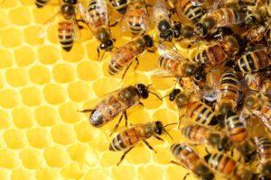 api regine